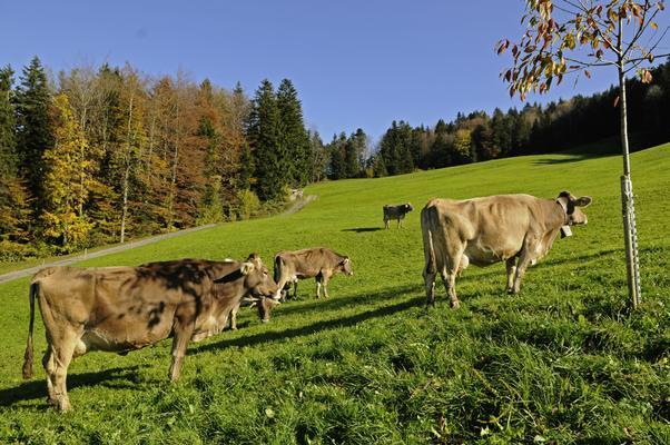 Ferienwohnung Schwarzenbachhof (862397), Steinen (Zentralschweiz), Schwyz, Zentralschweiz, Schweiz, Bild 15