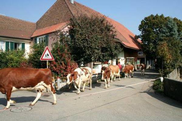 Ferienwohnung Stöckli - Hof zur Linde - Ferien auf dem Land - Ferien auf dem Bauernhof (862416), Attiswil, Aargau, Zürich, Schweiz, Bild 10