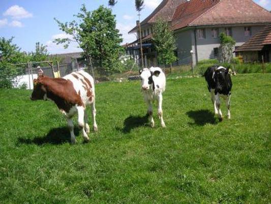 Ferienwohnung Stöckli - Hof zur Linde - Ferien auf dem Land - Ferien auf dem Bauernhof (862416), Attiswil, Aargau, Zürich, Schweiz, Bild 11