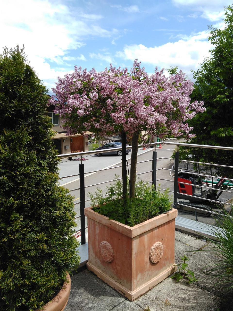 Holiday apartment EFH (870262), Emmetten, Nidwalden, Central Switzerland, Switzerland, picture 8