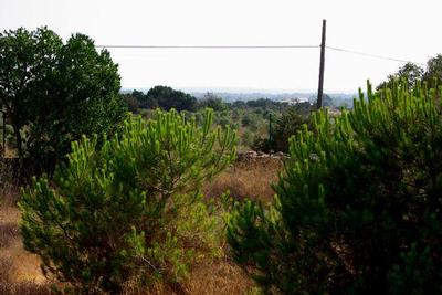 Maison de vacances Schöne alte Finca mit großem Garten (933964), San Fernando, Formentera, Iles Baléares, Espagne, image 20