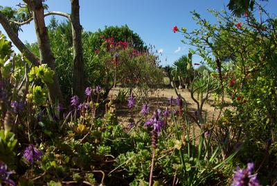 Maison de vacances Schöne alte Finca mit großem Garten (933964), San Fernando, Formentera, Iles Baléares, Espagne, image 17