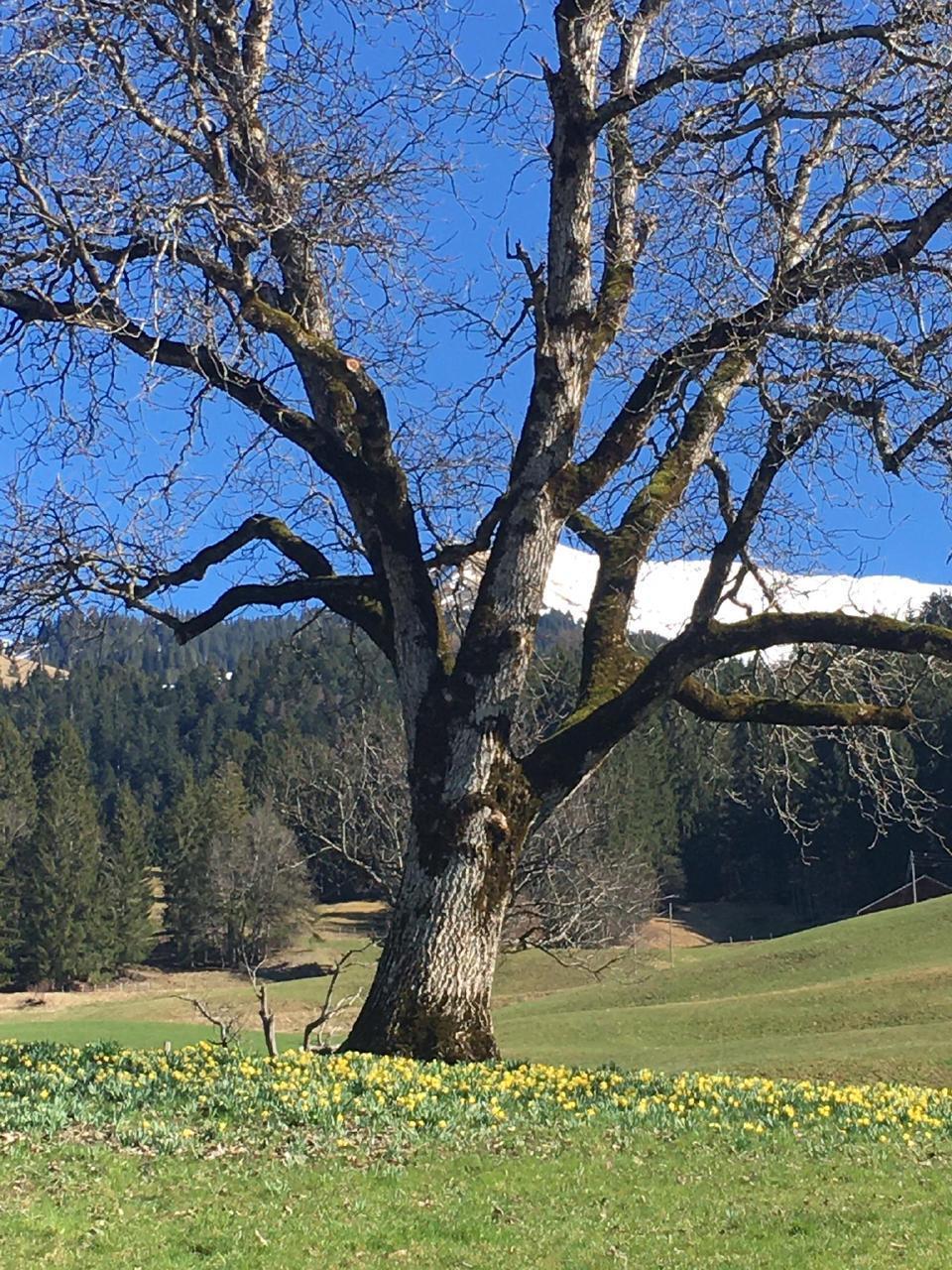 Appartement de vacances Chalet Park - Ferienwohnung privater Sauna und Hamam (934031), Diemtigen, Diemtigtal, Oberland bernois, Suisse, image 9
