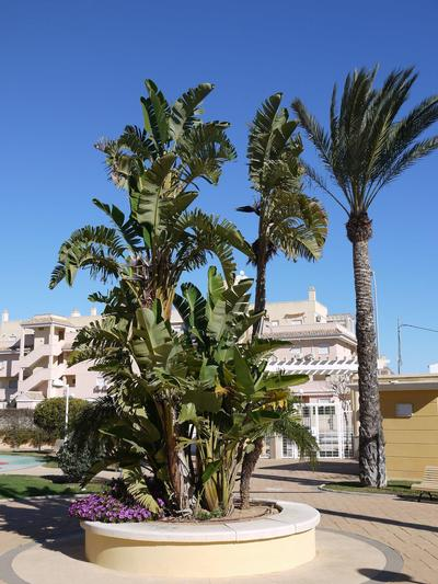 Ferienwohnung Aquamarinas (974885), Dénia, Costa Blanca, Valencia, Spanien, Bild 11