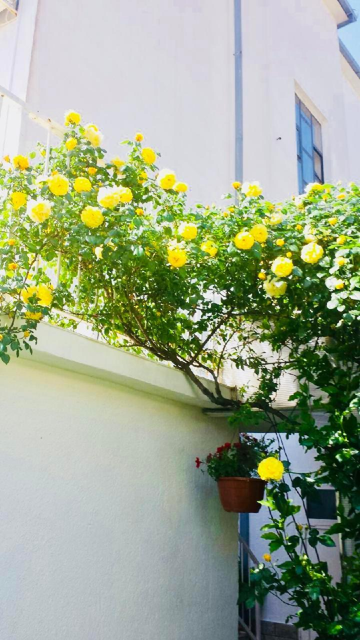Ferienwohnung Apartmenthaus Ruza 4 - Studio (98392), Kaštel Štafilić, , Dalmatien, Kroatien, Bild 22
