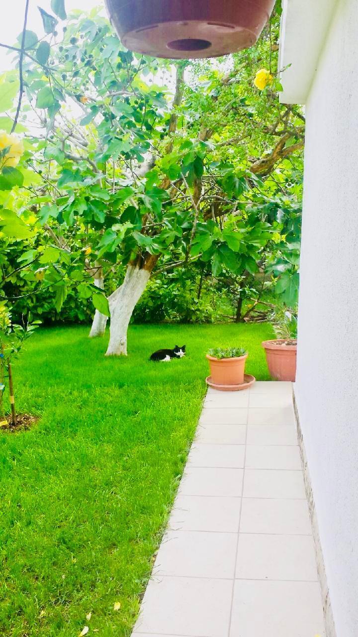Ferienwohnung Apartmenthaus Ruza 4 - Studio (98392), Kaštel Štafilić, , Dalmatien, Kroatien, Bild 27