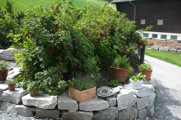 Ferienwohnung Hof Quadra (984112), Flerden, Domleschg - Heinzenberg, Graubünden, Schweiz, Bild 11